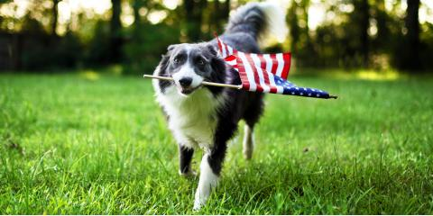 The Do's & Don'ts of Fourth of July Pet Safety, Honolulu, Hawaii