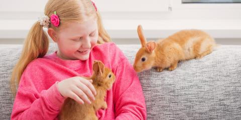 The Comprehensive Guide to Rabbit Care, Honolulu, Hawaii