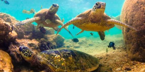 4 Common Questions About Hawaiian Marine Life, Honolulu, Hawaii