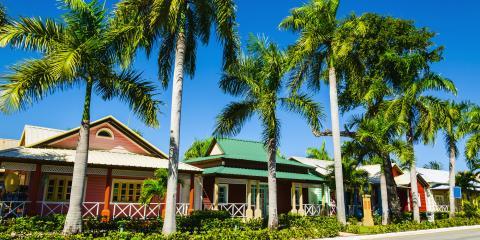 3 Reasons Homeowners Should Hire a Tree Service, Honolulu, Hawaii