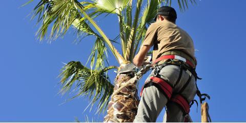 4 Benefits of Tree Trimming, Honolulu, Hawaii
