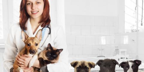 5 Ways to Make Trips to the Veterinarian Easier on Your Pet, Honolulu, Hawaii