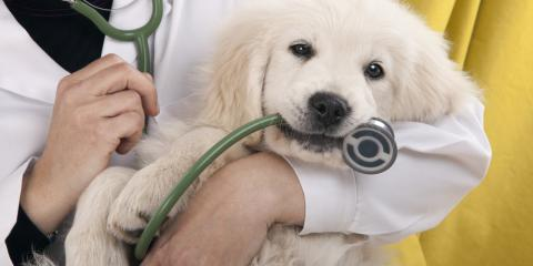 Veterinarian Explains Heartworm Disease & How You Can Prevent It, Honolulu, Hawaii