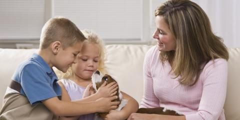 A Guide to Introducing a New Puppy or Kitten at Home, Honolulu, Hawaii