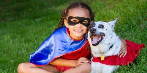 Honolulu Veterinarians Offer 5 Essential Halloween Pet Safety Tips, Honolulu, Hawaii
