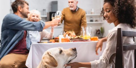 A Guide to Thanksgiving Food for Pets, Honolulu, Hawaii
