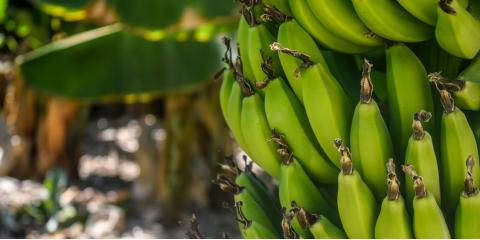 5 Fruit Trees That Flourish in Hawaii, Honolulu, Hawaii