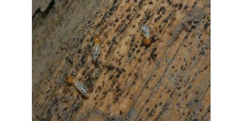Able Termite Control Offers Comprehensive Pest Control Service in Honolulu, Honolulu, Hawaii