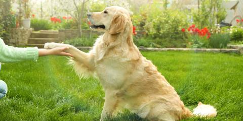 3 Fun Tricks to Teach a Dog, Honolulu, Hawaii