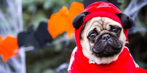 The Do's & Dont's of Dressing Up Your Pet for Halloween, Honolulu, Hawaii