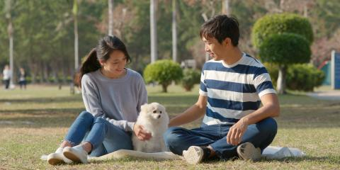 3 Ways to Prepare for a Pet's Passing, Honolulu, Hawaii