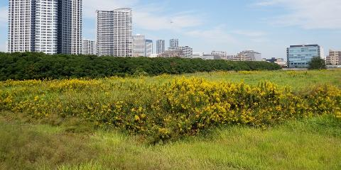 5 Potential Lot Clearing Issues You Should Know, Honolulu, Hawaii