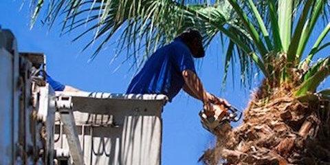 3 Reasons For Hiring a Professional Tree Service Company , Honolulu, Hawaii