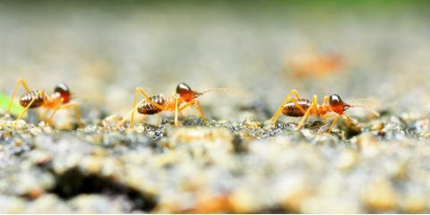 Ask a Termite Control Expert: What Are Termites?, Pahoa-Kalapana, Hawaii