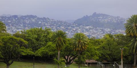 Why You Should Schedule Tree Trimming Before Summer, Honolulu, Hawaii