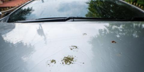 How Birds & Bugs Can Damage Your Car's Paint, Hopkins, Minnesota