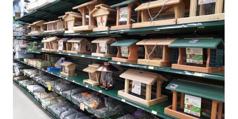January Bird Sale, New Brighton, Minnesota