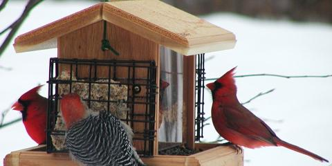 The Seven Basic Backyard Bird Feeders , Lincoln, Nebraska