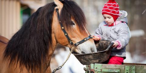 What are the Perks of Premium Horse Feed?, Lebanon, Ohio