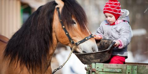 3 Tips for Horse Feed This Winter, Ragland, Alabama