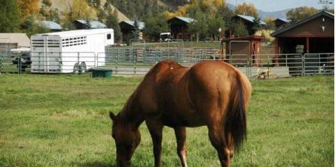5 Qualities to Look for in a Boarding Horse Stable , Pagosa Springs, Colorado