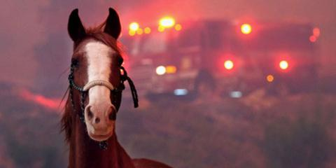 Choosing a Safe Location for your Horses and Large Animals in case of California Wildfires, Oceanside-Escondido, California