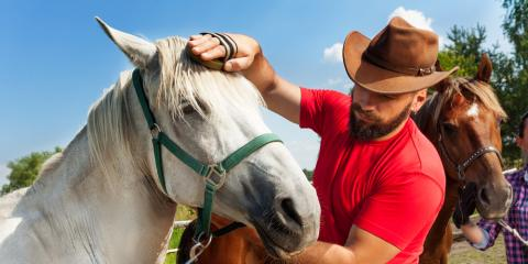 How to Buy Horse Tack, Whiteville, Arkansas