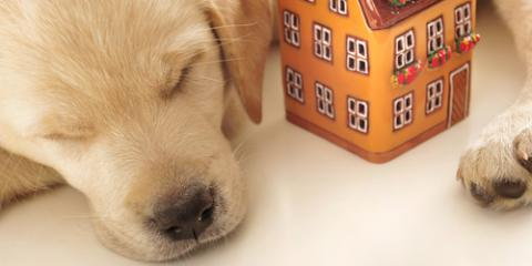 The Dos & Don'ts of House Cleaning When You Own Pets, Honolulu, Hawaii