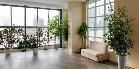 What You Need to Know About Indoor Plants, Fairfield, Connecticut