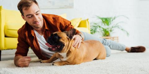 3 Tips for Keeping Your House Clean When You Have Dogs, Tuscarora, Maryland