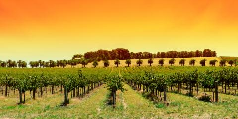 4 Business Insurance Policies Your Winery Needs, Houston, Missouri