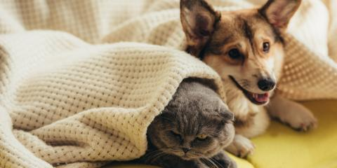 How to Keep Your Pets Safe During Pest Control Services, Houston, Texas