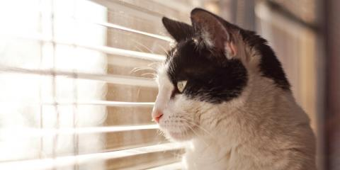 Veterinarians Discuss the Pros & Cons of Allowing Your Cat Outside, Piney, Missouri