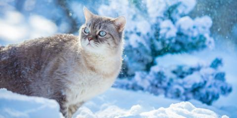 How to Create Shelter for Feral Cats During Winter, Wentzville, Missouri