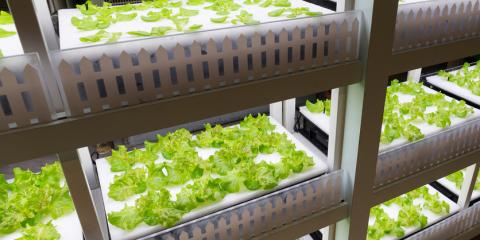 How Hydroponic Systems Help the Environment During a Drought , Pueblo, Colorado