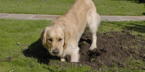 How to Deter Your Digging Dog with Landscaping Gravel , Helena Flats, Montana