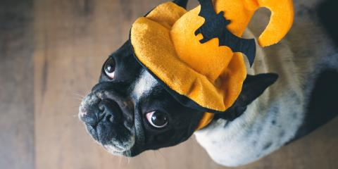 Veterinarians Explain How to Have a Safe & Happy Howl-O-Ween, Ewa, Hawaii