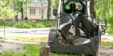 3 Reasons to Get Rid of the Stump Following Tree Removal, Jessup, Maryland