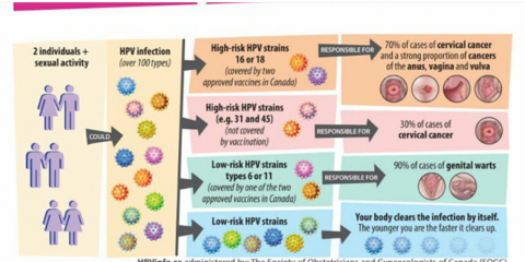 the human papilloma virus and cervical cancer in ghana Ico/iarc information centre on hpv and cancer ghana human papillomavirus and related cancers, fact sheet 2017 (2017-07-27) i key data on hpv and hpv-related cancers ghana has a population of 857 millions women ages 15 years and older who are at risk of develop-ing cervical cancer current es-timates indicate that every year 3052 women are.