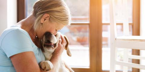 How to Help Your Dog Feel Comfortable With Boarding, Enterprise, Alabama