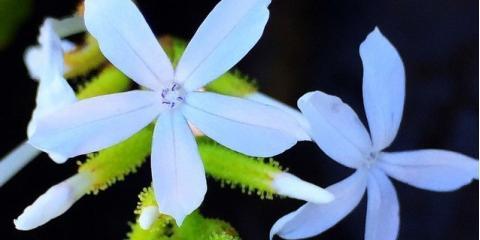 Explore the Beauty & Cultural History of Native Hawaiian Plants , Koolaupoko, Hawaii