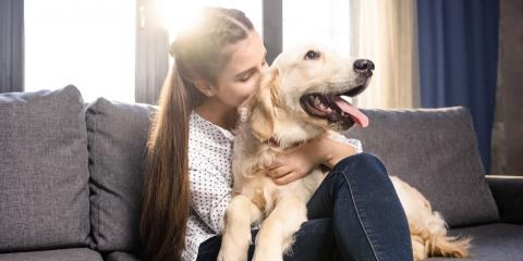 3 Tips for Minimizing Your Pet's Effect on Your HVAC System, Lake Havasu City, Arizona