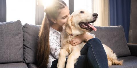 How Do Pets Affect Your HVAC unit?, Thomaston, Connecticut