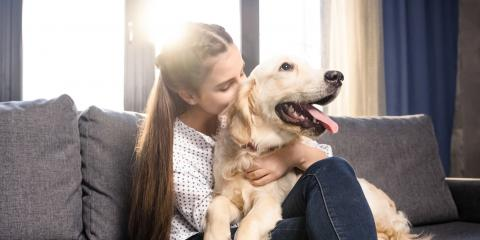 5 Ways Pet Owners Can Improve Indoor Air Quality, Nicholasville, Kentucky
