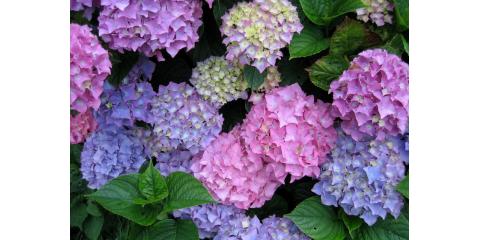 Let Flowerworks Help You With Wedding Flowers, Brooklyn, New York