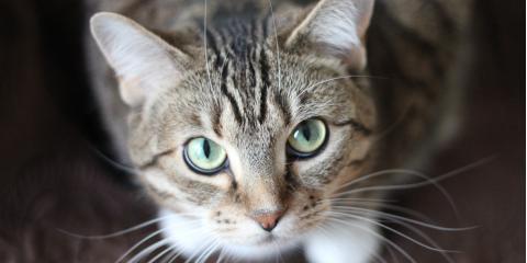 Hyperthyroidism in Cats, Branford Center, Connecticut