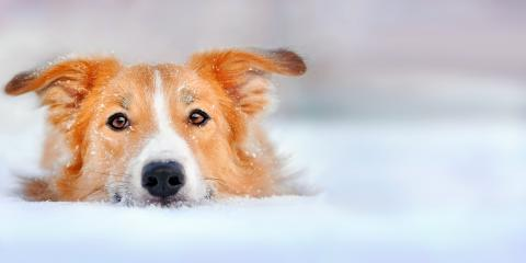 What You Should Know About Your Pet's Feet & Harmful Ice Melt Products, Foristell, Missouri