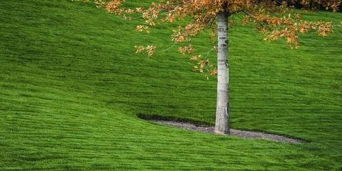 When Should You Water Your Plants? Virginia's Leading Landscape Maintenance Company Explains, Stuarts Draft, Virginia