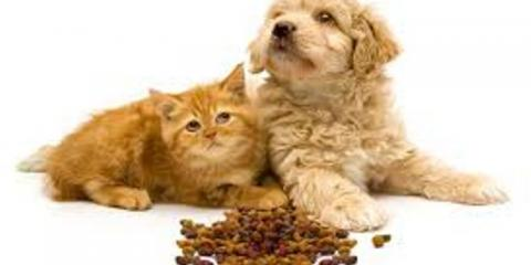 Trust sierra fish pets for american made treats all for Sierra fish and pets