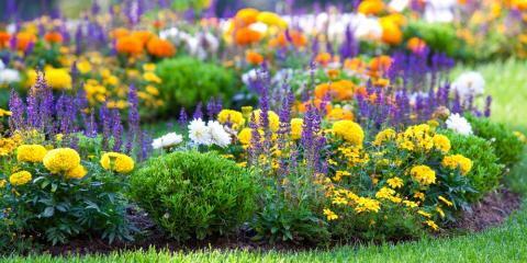 4 Great Flowers for Summer Planting, Hamilton, Ohio